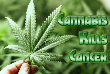 cannabis-kills-cancer-article